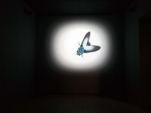 A exposição segue para o Rio de Janeiro e Brasília